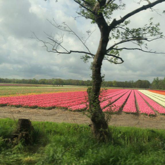 Nizozemska, 2. dan, Foto: Jasmina Žagar